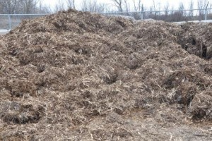 White Cedar Mulch